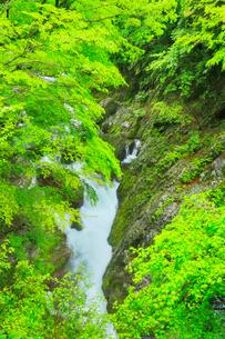 小田深山渓谷の新緑と清流の写真素材 [FYI02091321]