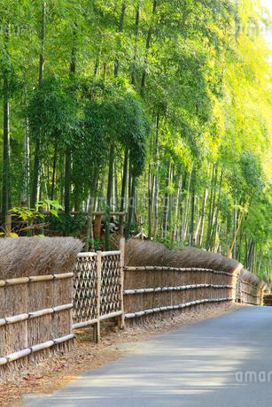竹林と道の写真素材 [FYI02091329]