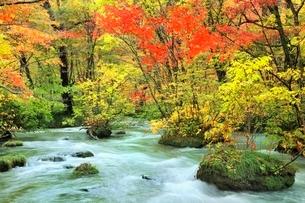 奥入瀬渓流・三乱の流れの紅葉の写真素材 [FYI02091372]