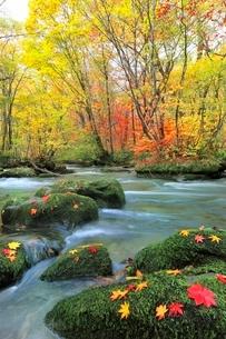 奥入瀬渓流・三乱の流れの紅葉の写真素材 [FYI02091429]