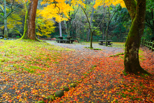 山中温泉 紅葉の鶴仙峡遊歩道・広場の写真素材 [FYI02091444]