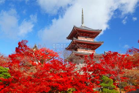 清水寺・三重塔と紅葉の写真素材 [FYI02091594]