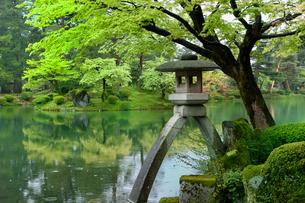 新緑の兼六園 ことじ灯籠の写真素材 [FYI02091610]