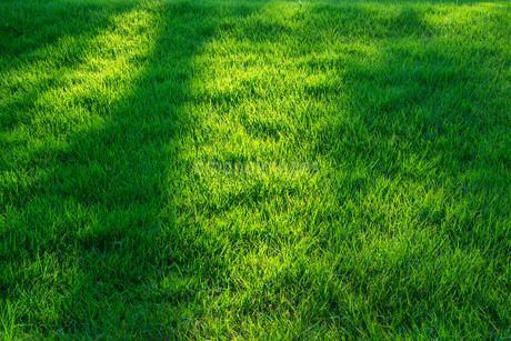 緑の芝生の写真素材 [FYI02091662]