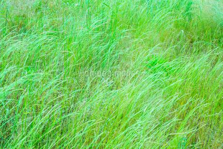 緑の草原の写真素材 [FYI02091663]