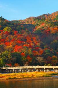 嵐山・渡月橋と紅葉の写真素材 [FYI02091696]