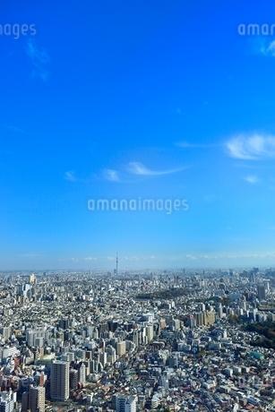 サンシャイン60より東京の街並みとスカイツリーの写真素材 [FYI02091707]