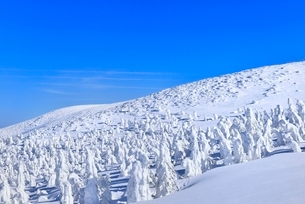 蔵王 地蔵山の樹氷の写真素材 [FYI02091749]