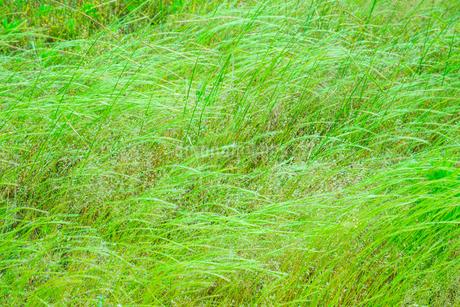 緑の草原の写真素材 [FYI02091753]