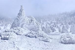 蔵王 地蔵山の樹氷と樹氷原の写真素材 [FYI02091838]