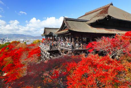 清水寺の紅葉の写真素材 [FYI02091903]