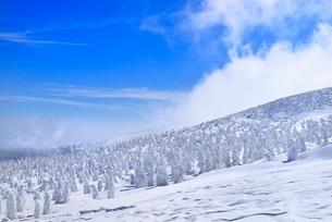 蔵王の地蔵山の樹氷原の写真素材 [FYI02091916]