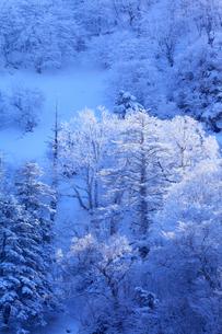 剣山の樹氷の写真素材 [FYI02091947]