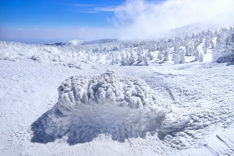 蔵王 地蔵山の樹氷と樹氷原の写真素材 [FYI02091956]