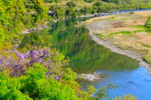 四万十川の清流とフジの花の写真素材 [FYI02091967]