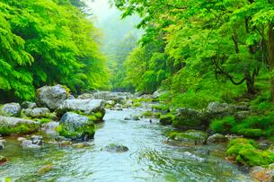 小田深山渓谷の新緑と清流の写真素材 [FYI02091974]