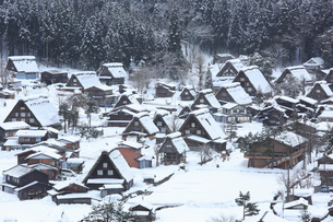 雪の白川郷合掌造り集落の写真素材 [FYI02092003]