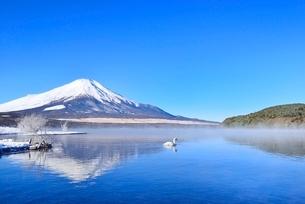 朝霧の山中湖と逆さ富士に白鳥の写真素材 [FYI02092071]
