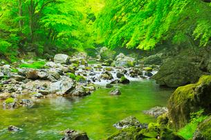 小田深山渓谷の新緑と清流の写真素材 [FYI02092072]