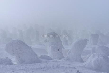 蔵王 地蔵山の樹氷の写真素材 [FYI02092083]