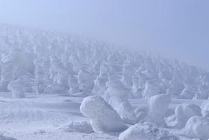蔵王 地蔵山の樹氷の写真素材 [FYI02092094]