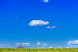 雲と青空にナノハナ咲く土手の写真素材 [FYI02092102]