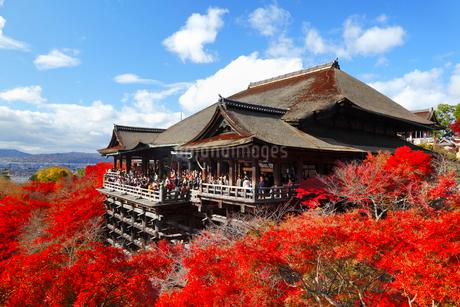 清水寺の紅葉の写真素材 [FYI02092160]