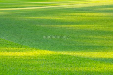 緑の芝生の写真素材 [FYI02092163]