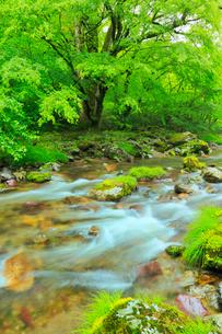 小田深山渓谷の新緑と清流の写真素材 [FYI02092179]
