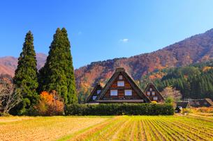 秋の白川郷の写真素材 [FYI02092193]