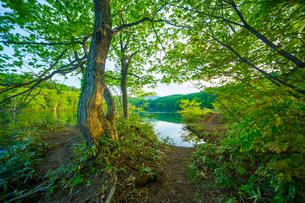 新緑の希望湖畔の写真素材 [FYI02092197]
