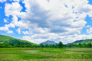 尾瀬ヶ原 ミズバショウの湿原と燧ヶ岳の写真素材 [FYI02092251]