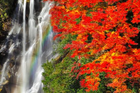荒滝とカエデの紅葉に虹の写真素材 [FYI02092280]