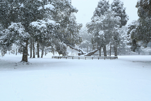 降雪の奈良公園 浅茅ヶ原 の写真素材 [FYI02092373]