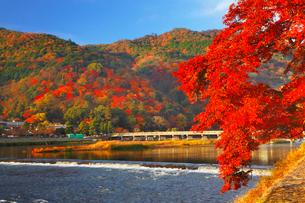 嵐山・渡月橋と紅葉の写真素材 [FYI02092420]