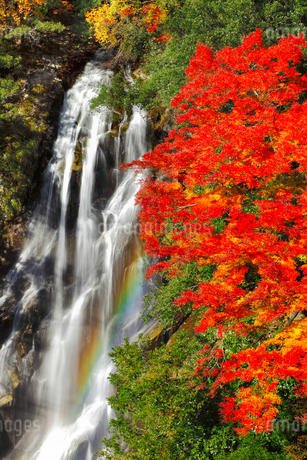 荒滝とカエデの紅葉に虹の写真素材 [FYI02092479]