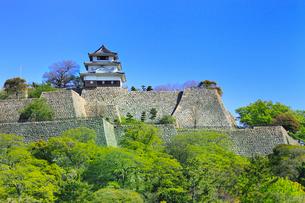 丸亀城と新緑 の写真素材 [FYI02092516]