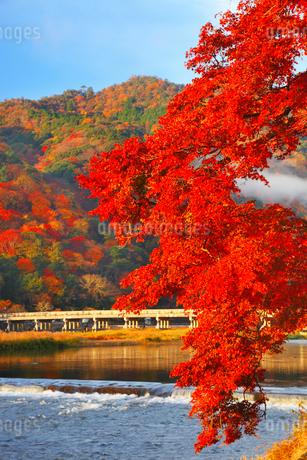 嵐山・渡月橋と紅葉の写真素材 [FYI02092530]