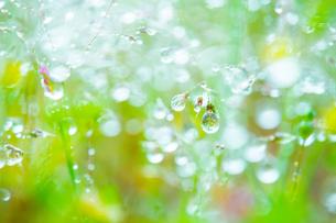 新緑の草に水滴の写真素材 [FYI02092545]