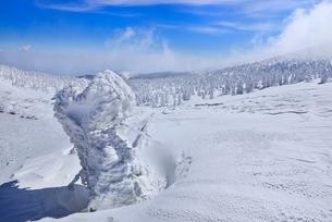 蔵王 地蔵山の樹氷と樹氷原の写真素材 [FYI02092658]