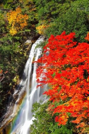 荒滝とカエデの紅葉に虹の写真素材 [FYI02092763]