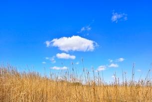 葦原に雲の写真素材 [FYI02092802]