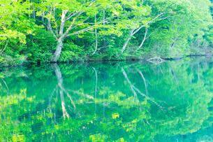 新緑の希望湖と水面の写真素材 [FYI02093005]