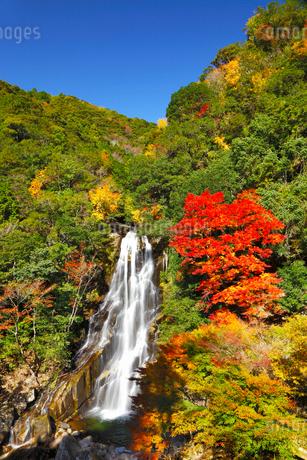 荒滝とカエデの紅葉の写真素材 [FYI02093055]