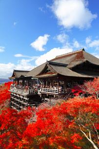 清水寺の紅葉の写真素材 [FYI02093057]