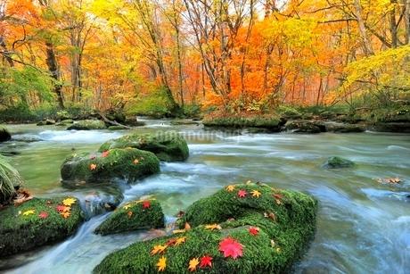 奥入瀬渓流・三乱の流れの紅葉の写真素材 [FYI02093173]