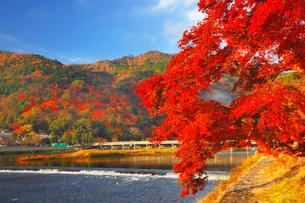 嵐山・渡月橋と紅葉の写真素材 [FYI02093217]