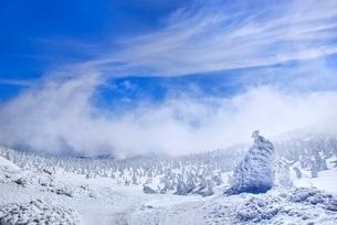 蔵王 地蔵山の樹氷と樹氷原の写真素材 [FYI02093514]