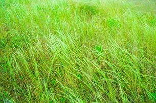 緑の草原の写真素材 [FYI02093553]