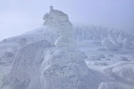蔵王 地蔵山の樹氷の写真素材 [FYI02093621]